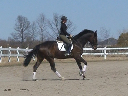 Hanoverian Breeders Club Young Horse Development Program