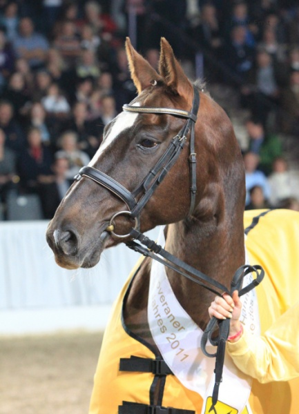 Personality and Charisma: Wanda – Hanoverian Mare of the Year 2011