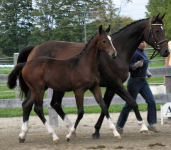 Canadian Hanoverian Inspection Schedule for 2012