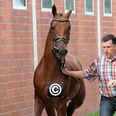 Eastern Canada Clubmember has Two-Year old Colt Selected for 2012 Hanoverian Keuring